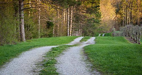 orchard path